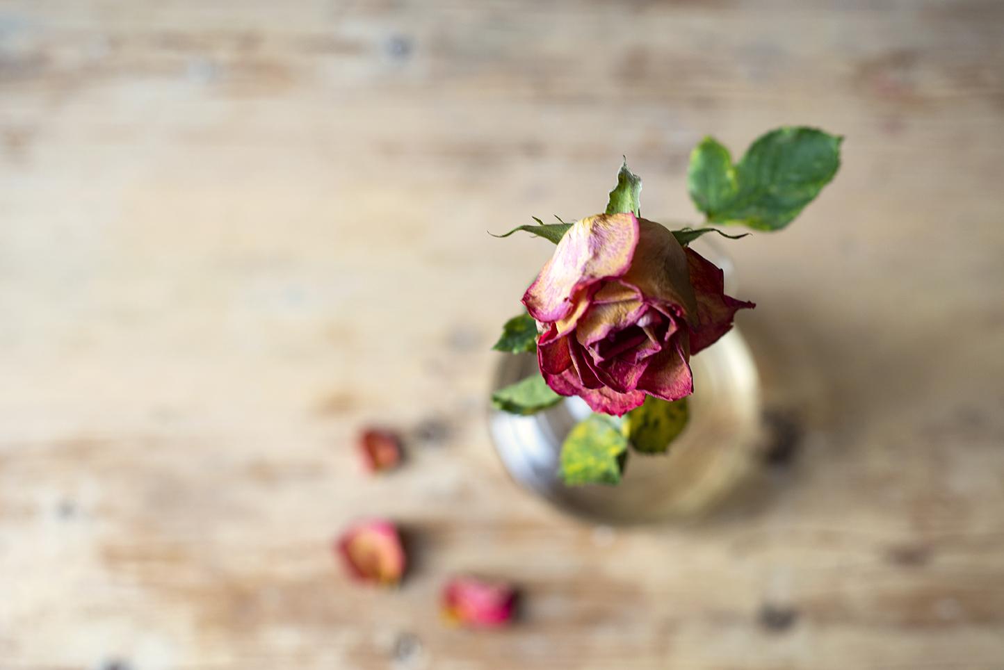 Halvvissnad ros i en glasvas sedd rakt uppifrån.
